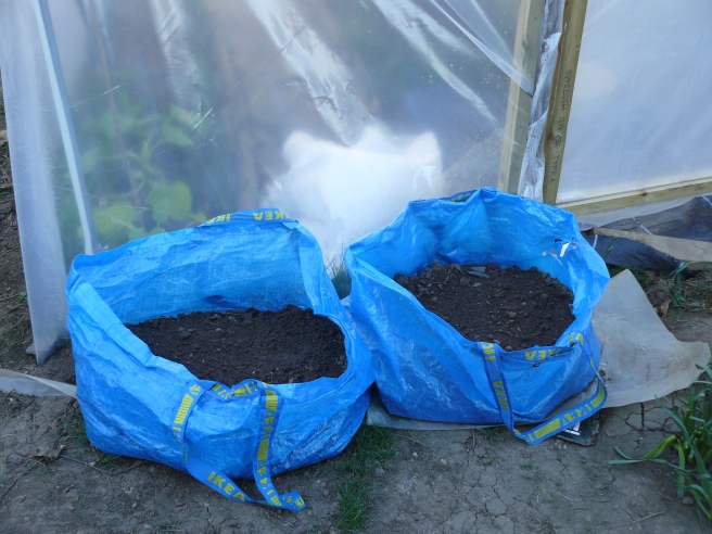 Potatoes planted in Ikea bags